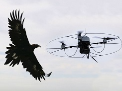 Eagle used to catch drones